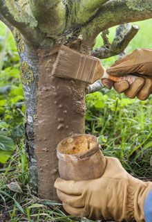Brush the fruit trees - Potager Garden, Garden Paths, Garden Landscaping, Love Garden, Water Garden, Gardening Zones, Gardening Tips, Kitchen Gardening, Canna Flower