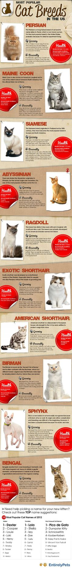Curious which #cat breeds are the most popular in America? You voted and here are the results: