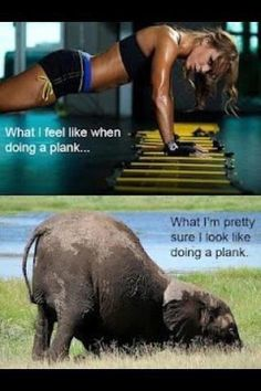 what I think I looke like doing a plank - what I actually look like doing a plank