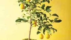 15 Fruits and Veggies to Grow Indoors this Winter