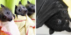 19 Reasons Being Afraid Of Bats Makes You A Total Wuss
