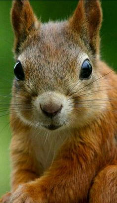 Squirrely Close-up