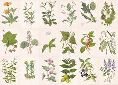 Set of 18 Vintage 8 x6 Herbs Prints - 1987. Fine Arts, Moscow. $32.00, via Etsy.