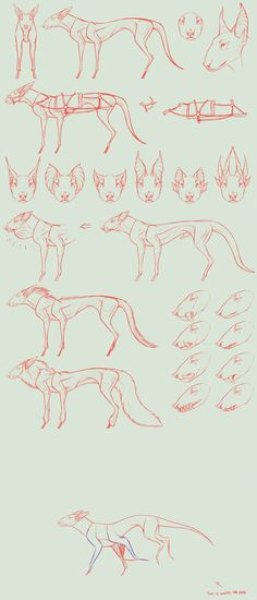 SPECIES CONCEPT + anim. FULL PERMS. (OPEN) by NorthernRed