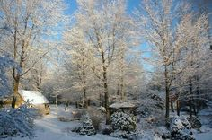 Snowy forest worth homes