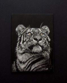 """A new scratchboard from me.  5"""" x 7"""".  Shizuka the tiger from Tama zoo in Japan."""