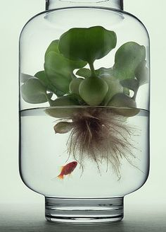 Water plants with a sweet little fish.