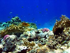 underwater garden | underwater garden by ~Antasya on deviantART