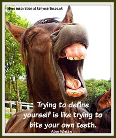No valid plans for the future can be made by those who have no capacity for living now. ~ Alan Watts #quote #wisdom #horse #teeth #alanwatts