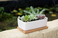 Mini Succulent Planter Set Giveaway Succulent Planter Diy, Succulents Diy, Planter Pots, Crate Ottoman, Rectangular Planters, Plant Wall, Ceramic Planters, Centerpieces, Giveaways