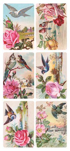 Vogels met rozen poezieplaatjes Stickers Y199