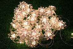 LED String Lights 4M13feet 40 LED Lotus Flower for Chrismas Party Wedding Indoor Garden Dcor Warm white * To view further for this item, visit the image link.