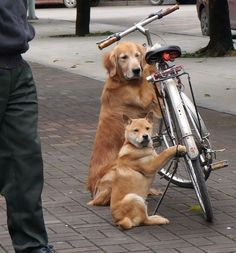 nevver: Hey, that's my bike.