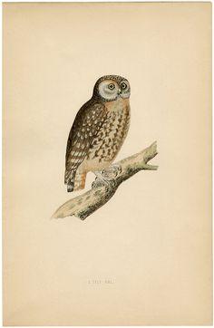 Vintage Owl Printable