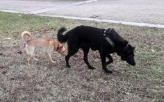 02/12/2016 - Torino con Sanny Goats, Animals, Animales, Animaux, Animal, Animais, Goat