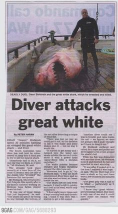 Diver kills Great White shark? Just when you needed an adrenalin fix!