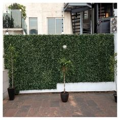 Order Kontiki Vinyl Siding - Faux Green Wall Panel Myrtle / Faux Living Wall delivered right to your door. Artificial Hedges, Artificial Boxwood, Modern Backyard, Backyard Landscaping, Landscaping Design, Backyard Patio, Cinder Block Walls, Wall Backdrops, Raised Garden Beds