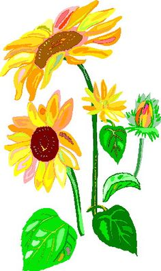 Beautiful Sunflowers Clipart Images Clipart Free
