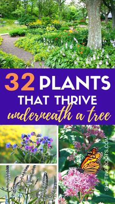 Shade garden 342344009174543039 - Not sure what to plant when you're landscaping under a tree? Here's 32 shade friendly perennial flowers, ground cover, annuals, and shrubs that would be beautiful in your front yard or backyard. Part Shade Perennials, Shade Annuals, Flowers Perennials, Planting Flowers, Shrubs For Shade, Shade Trees, Shade Flowers Perennial, Groundcover For Shade, Flowering Ground Cover Perennials