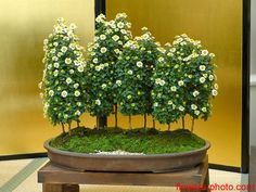 ~ Amazing Bonsai ~ Saikei ~