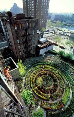 A truly urban garden, proving the point that two things existing in stark contrast... elevates both.
