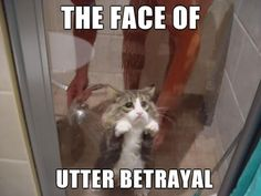 Still the best betrayal picture I've ever seen // funny pictures - funny photos - funny images - funny pics - funny quotes - #lol #humor #funnypictures