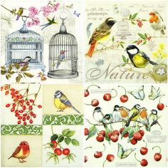 4 x Single Luxury Paper Napkins for Decoupage and Craft Robin  Mix
