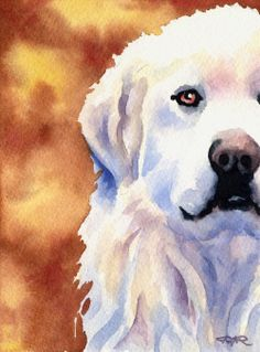 GREAT PYRENEES Art Print Signed by Artist DJ by k9artgallery WATERCOLOR