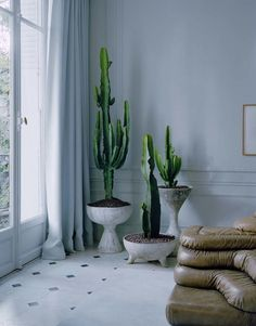 Opt for cacti With graphic euphorbias that we orchestrate in trio in pots of different shapes and heights signed Willy Guhl. A staging that plays on the contrasts of the raw material in a classic interior. Mid-century Interior, Interior Plants, Classic Interior, Interior Styling, Interior And Exterior, Small Backyard Gardens, Backyard Garden Design, Grand Cactus, Decoration Plante