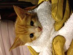 Feral kitten Feral Kittens, Collie, Pets, Animals, Animales, Animaux, Animal, Animais, Animals And Pets