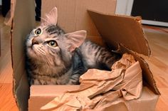 Another cat in a box!