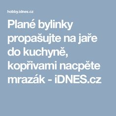 Plané bylinky propašujte na jaře do kuchyně, kopřivami nacpěte mrazák - iDNES.cz