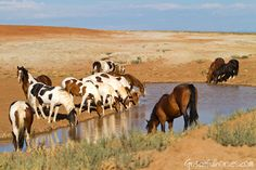 Equestrian Travel Articles - Photographing the Wild Mustangs of ...