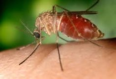 Mosquitos are the major problem nowadays. On rainy season, the population of the Mosquitos increase due to various factors. The Mosquitos . Mosquito Barrier, Mosquito Control, Pest Control, Repelir Mosquitos, Virus Zika, Japanese Encephalitis, O Blood Type, Natural Mosquito Repellant, Mosquito Spray