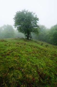 Parque natural Saja-Besaya  #Cantabria #Spain