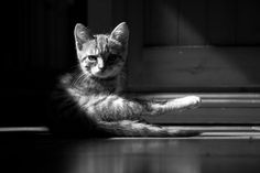 At Day All Cats Are Grey | by futurepics