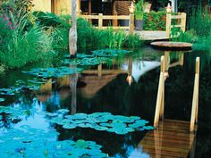 A wooden deck leads into this mixed-use swimming pond with lily pads, low water plants, and small docks.