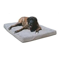4' BioMedic Memory Foam Dog Pillow Size: Extra Large, Fabric: Vinyl - Royal ^^ New and awesome dog product awaits you, Read it now  : Pet dog bedding