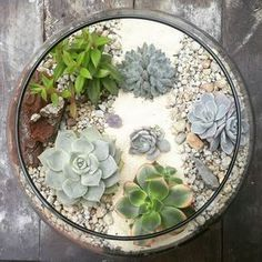 Plants make the world go round #terrarium #suculentascolombia#succulents  #suculoveuculentas