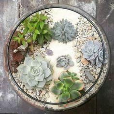 Plants make the world go round #terrarium #suculentascolombia#succulents  #suculoveuculentas