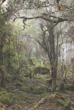 https://vk.com/fogforest?z=photo-136887713_456239649/wall-136887713_795