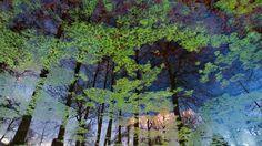 Reflection on a Lake, Mountain Park Wilhelmshöhe, Kassel, Hessen, Germany (© RCA Gryniewicz/plainpicture)