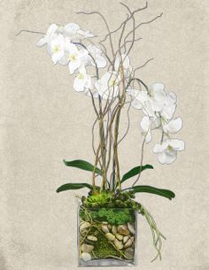 Let our talented designers create something beautiful for your space. Silk Orchids, Holiday Tables, Foyers, Something Beautiful, Floral Designs, Staircases, Floral Arrangements, Florals, Glass Vase