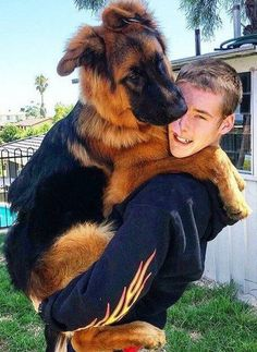 GSD puppies love to be carried. Lol