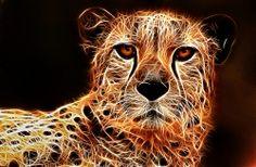 Phila Cheetah-Fractalius 5-0 F LR 5-12-07 J038030
