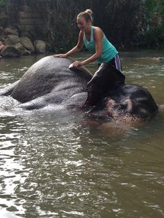 Bathing an Elephant - Our Story - Aliya Dung Paper Eco Friendly Paper, Paper Supplies, Hippopotamus, Bathing, This Is Us, Elephant, Notebook, Animals, Bath