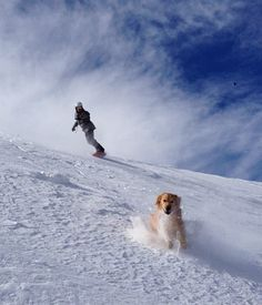 Snowboarding with your Dog