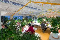 SelgasCano designed a coworking space at the Mercado de Ribeira in Lisbon, which uses more than 1,000 plants to create natural privacy between teams.