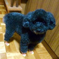 靴下ぁ〜(*^_^*)