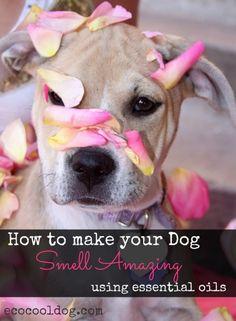1000 ideas about smelly dog on pinterest dogs dog